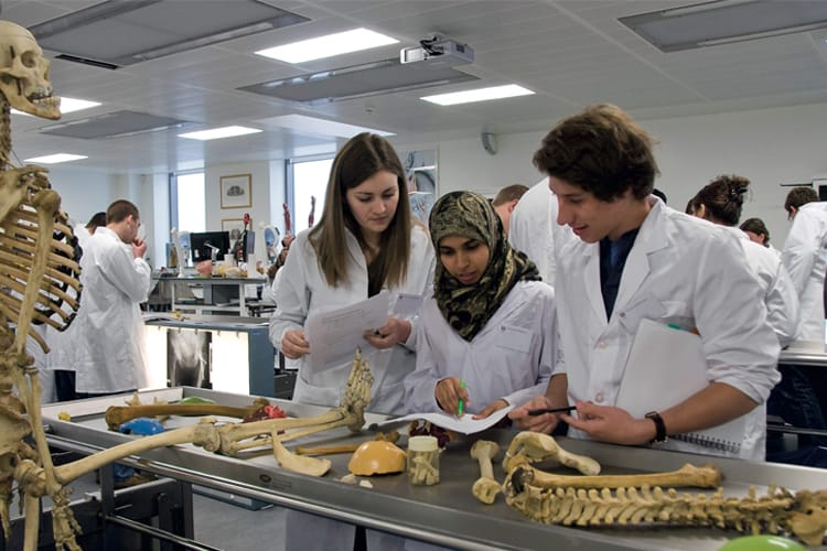 Students studying medicine