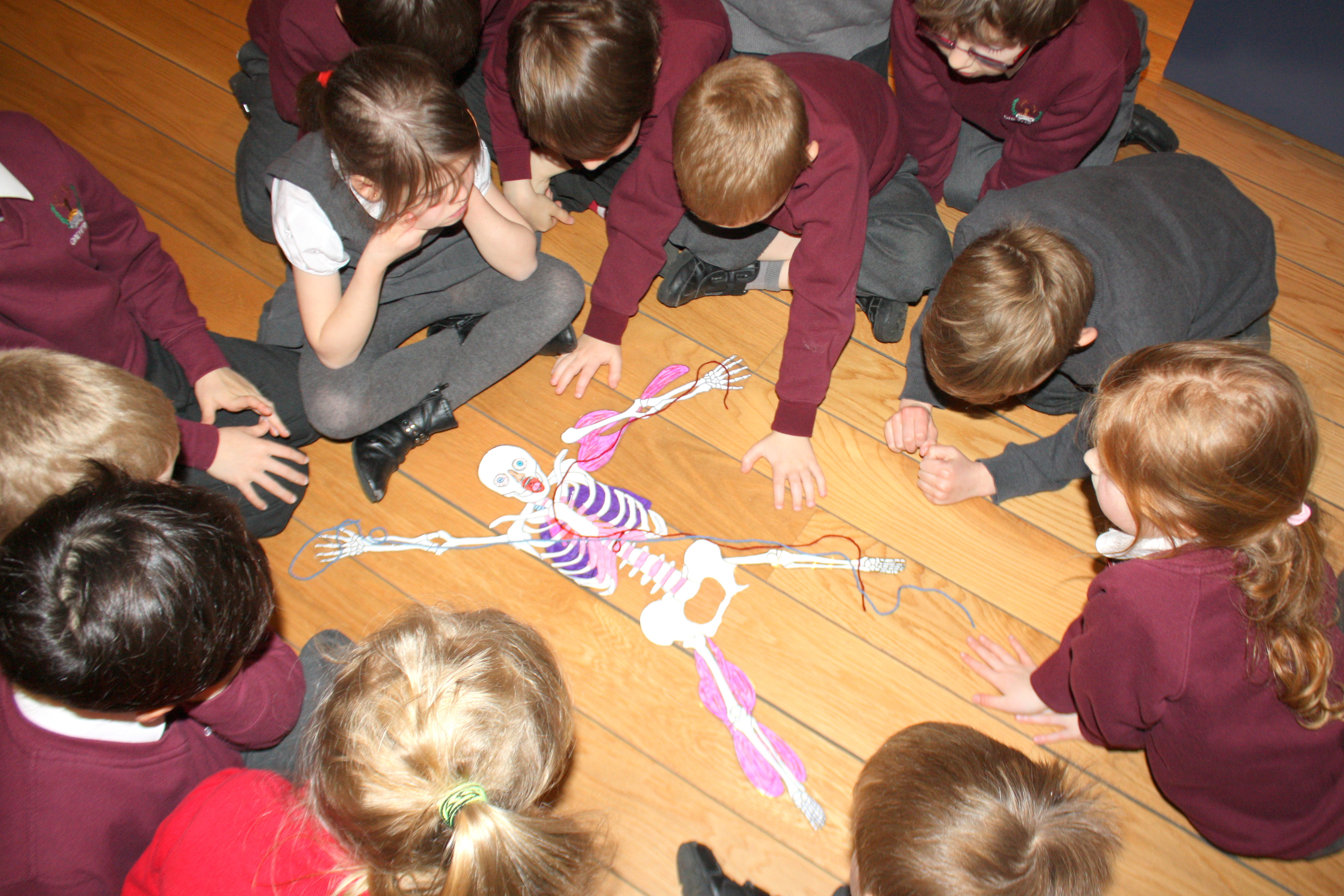 A group of primary school children work together to create a jigsaw of a human skeleton.