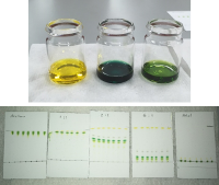 Pigments in solution and chromatograms
