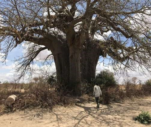 Reconsidering the 'Archaeology of Trees' in African Archaeology
